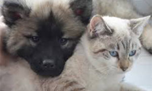 Cat and Dog - See our guide here at Bonner Storage Station